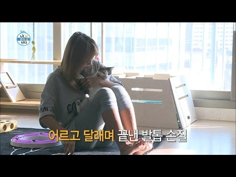 【TVPP】Hyorin(SISTAR) - Care and Love cats, 효린(씨스타) - 고양이 집사 효린(?) 삼 남매를 향한 무한 애정! @ I Live Alone