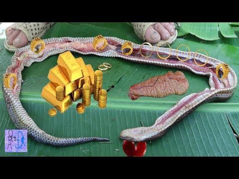 Mổ Bụng Rắn Thần Phát Hiện Kho Báu Vàng Trong Bụng Rắn. Amazing ! Gold In The Belly Of Snake