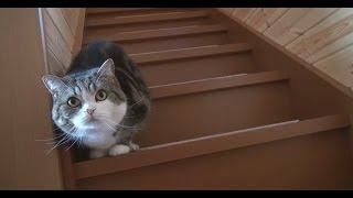 階段とねこ
