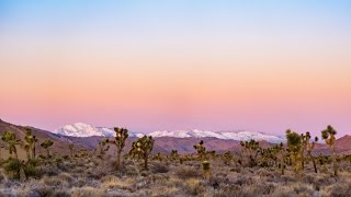 Joshua Tree National Park in the Winter