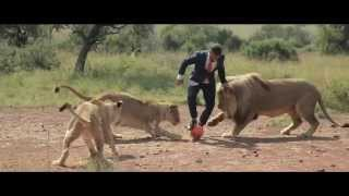 A world's first: Kevin Richardson playing football with wild lions