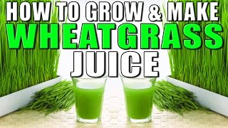 how to make wheatgrass juice for cancer