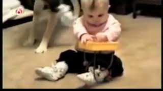 Afv Salute to kids and animals montage