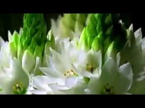 Kako cveće cveta?