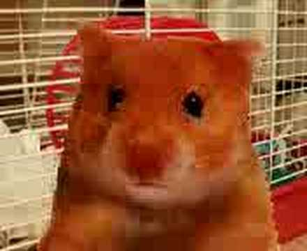 Harry The Hamster 2