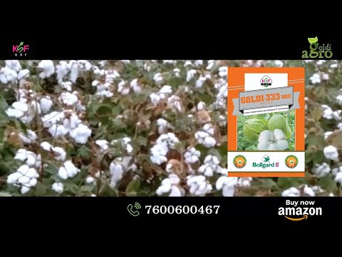 GOLDI 333 BGII- BT COTTON SEEDS. ORDER ON +91 7600600467 AND ALSO ORDER ON AMAZON