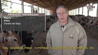 Rancho Mainardes Jersey - Referência brasileira na criação de gado Jersey de qualidade superior