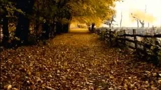 آنس الغامدي - وعباد الرحمن الذين يمشون