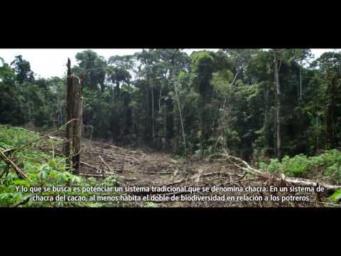 Un bosque de oportunidades en Ecuador