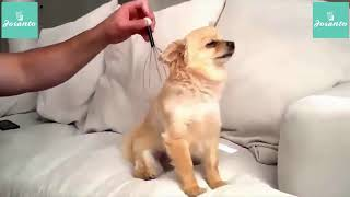 Funniest Cute, Confused & Cool Dog Compilation Videos | Funny pet Dog Videos