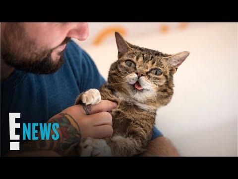 Internet Sensation Lil Bub Dies at Age 8 | E! News