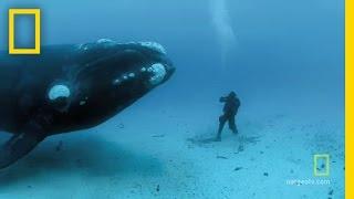 Encuentro con la ballena franca