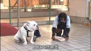 狗狗猩猩大冒險2 Episode 09