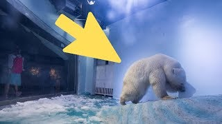 Saddest Polar Bear In The World' Gets A Stroke Of Good Luck That's Transforming His Life