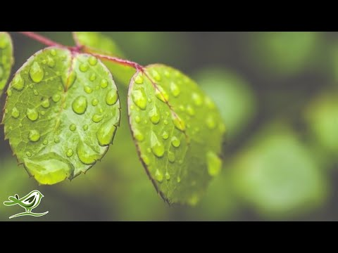 Relaxing Piano Music: Water Sounds, Sleep Music, Fall Asleep Fast, Relaxing Music ★89🍀