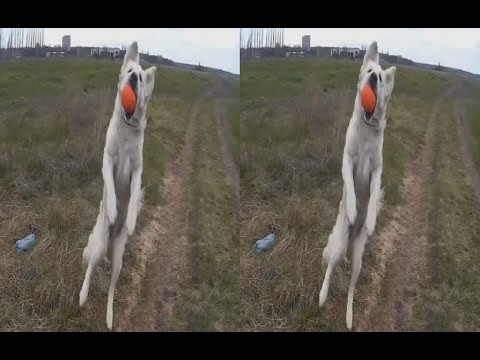 Dog DUNE ( Part 2 of 5 ) ! A large field ! 3D VIDEO