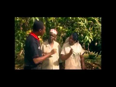 fruitfly shamba shape up english video