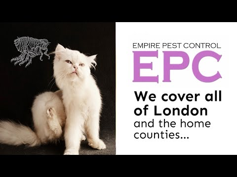 UK Flea Management From Empire Pest Control