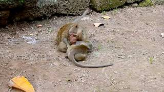 MG, Very Small Baby, Why Sweet Pea Force Baby Monkey Like This? Baby Okay?.