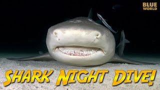 Night Diving with Sharks! | JONATHAN BIRD'S BLUE WORLD