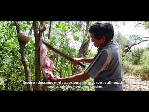 Un bosque de oportunidades en Paraguay - versión corta