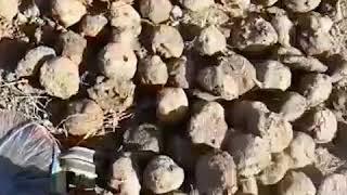 الألغام التي زرعها تنظيم داعش في قرى الشعيطات     -