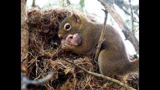 Did you KNOW? Squirrels adopt babies.