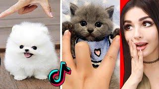 The CUTEST Animals On Tik Tok 2