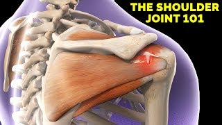 Shoulder Anatomy & Rotator Cuff Mini-Lecture