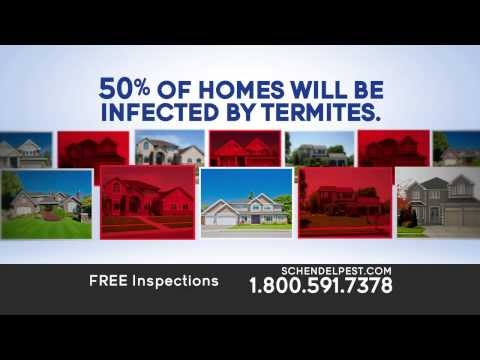 Protect Your Home From Termites With Schendel