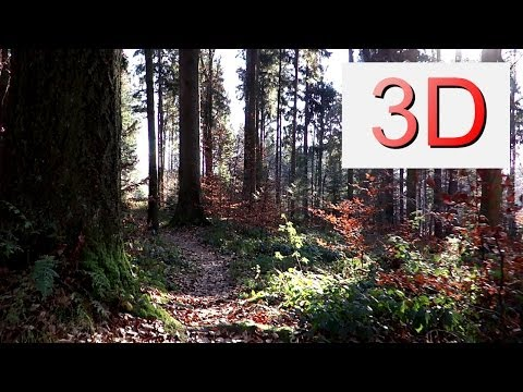 3D Video 4K: NOVEMBER FOREST WALK