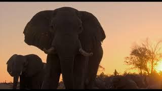 éléphants :  bande-annonce