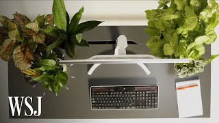Biophilia Expert Explains How to Pick the Right Office Plants | WSJ