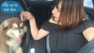 Bức xúc : Việc bắt và tiêu hủy chó sau 3 ngày nếu ra đường không rọ mõm