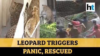 Leopard enters residential area, creates panic in Gujarat..