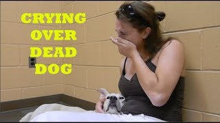 Heartbreaking Moment: Woman Crying Over Her Dead Dog