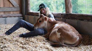 Cabanha Vô Netska Jersey - Dedicação e amor pelo gado Jersey - TV JERSEY - PGM #50