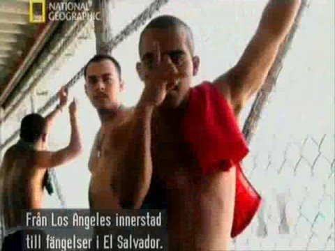 Mara Salvatrucha - World's Most Dangerous Gang Part1