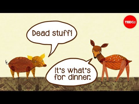 Dead stuff: The secret ingredient in our food chain - John C. Moore thumbnail