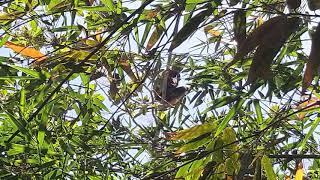 Tarzan Jadi-jadian asal Tulungagung