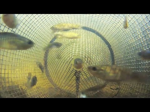 Homemade minnow trap car interior design for Diy fish trap