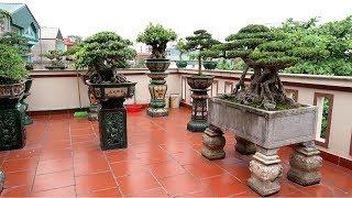 Thăm một sân chơi Bonsai cây cảnh nghệ thuật cực đẹp ở trên cao