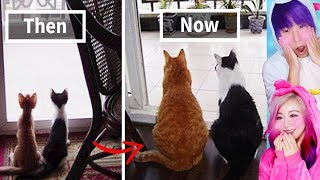 Animals Who Grew Old Together! Cutest Moments!