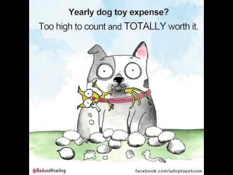 Annual Dog Toy Expense