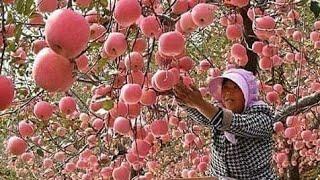 عندما يصل الابداع والجمال في عالم الزراعه لهذا الحد مريح للبصر Amazing Agriculture World