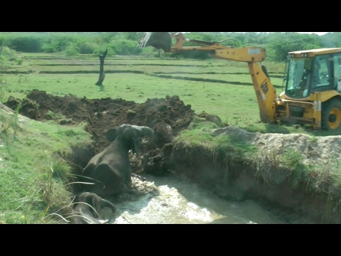 Elephant and Calf Rescued From Well After Two Days
