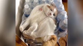 You will get STOMACH CRAMPS from LAUGHING SO HARD! - Funny ANIMAL VIDEOS compilation