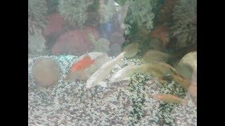 Stunning Aquarium Fish ! Amazing Fish Video ! Golden Fish For Kids ! Real Fish Video