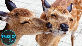 Top 10 Ways Animals Look Out for Each Other