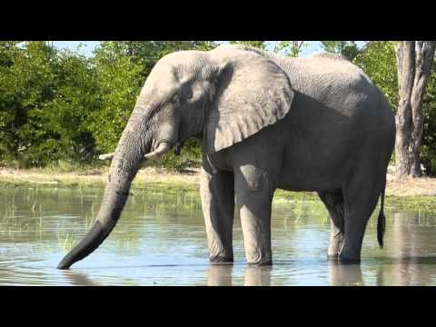 Elephant Sighting - Botswana
